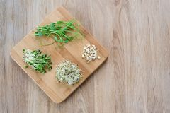 Different types of micro greens on wooden background. Healthy eating concept of fresh garden produce organically grown. As a symbol of health and vitamins from Royalty Free Stock Photo