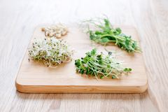 Different types of micro greens on wooden background. Healthy eating concept of fresh garden produce organically grown. As a symbol of health and vitamins from Royalty Free Stock Images