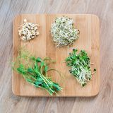 Different types of micro greens on wooden background. Healthy eating concept of fresh garden produce organically grown. As a symbol of health and vitamins from Royalty Free Stock Photography