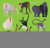 Different types of monkeys ape breed rare animal vector set. Cartoon macaque nature primate monkey chimpanzee, orangutan. Different types of monkeys breed rare Royalty Free Stock Photo