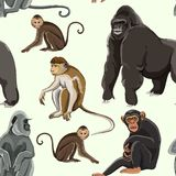 Different types of monkeys pattern Royalty Free Stock Photography