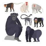 Different types of monkeys rare animal vector set. Royalty Free Stock Image
