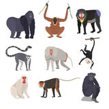 Different types of monkeys rare animal vector set. Stock Photo