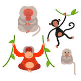 Different types of monkeys rare animal vector set. Royalty Free Stock Photos