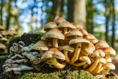 Different types of mushrooms on an old tree stump. In the forrest stock photo
