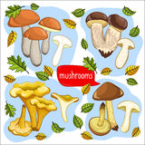 Different types of mushrooms raster illustration Stock Image