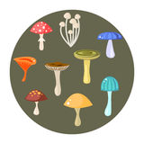 Different types of mushrooms set, vector illustration Stock Photo