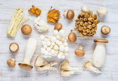 Different Types of Mushrooms in Top View. Top View of Different Types of Edible Mushrooms royalty free stock images