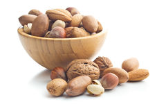 Different types of nuts in the nutshell. Stock Images
