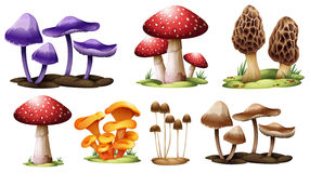 Different Types Of Mushrooms Stock Images