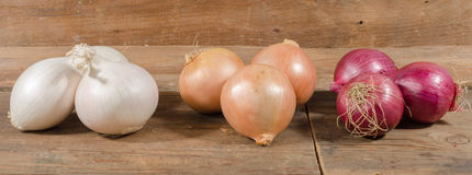 Different types of onions Stock Images