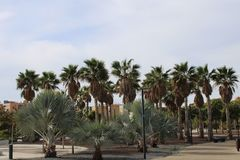 Different types of palm trees stock images