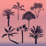 Different types of palms vector. Vector set of isolated silhouettes of palms. Dark silhouettes of palm trees at sunset background Stock Image