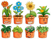 Different types of plant in clay pots Stock Photography