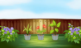 Different types of plant inside the wooden fence Stock Images