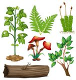 Different types of plants Stock Images