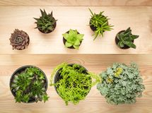 Potted succulent plants on wooden background. Different types of potted succulent plants on wooden background royalty free stock photo