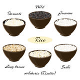 Different types of rice in bowls. Different types of rice Basmati, wild, jasmine, long brown, arborio, sushi in ceramic bowls Vector illustration EPS 10 royalty free illustration