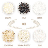 Different types of rice grains isolated on white background. Basmati, wild, jasmine, long brown, arborio, sushi. Vector illustration. For culinary, shop Royalty Free Stock Image