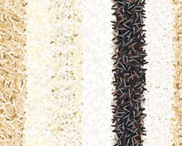 Different types of rice seamless pattern. Basmati, wild, jasmine, long brown, arborio, sushi. Six Stripes. For poster, cooking, culinary prints textile Stock Photography