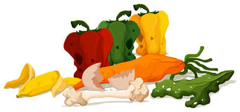 Different types of rotten vegetables. Illustration Stock Photography