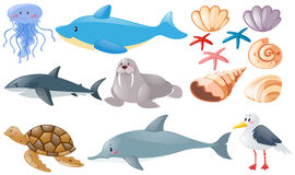 Different types of sea animals vector illustration