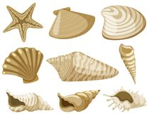 Different types of seashells in brown color. Illustration Royalty Free Stock Image