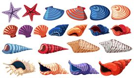 Different types of seashells on white background Royalty Free Stock Photos
