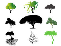 Different types of trees Stock Photos