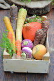 Different types of vegetables Royalty Free Stock Photo