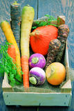 Different types of vegetables Stock Photo