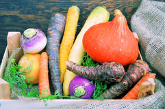Different types of vegetables Stock Image