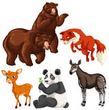 Different types of wild animals Royalty Free Stock Photo