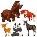 Different types of wild animals Stock Image
