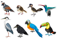 Different types of wild birds Royalty Free Stock Images