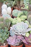 Different varieties of flowers and cacti and succulents, cacti and desert plants and arid soil royalty free stock photos