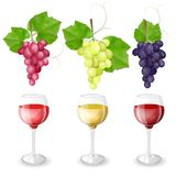 Different varieties of grapes and glasses of wine. On white background Stock Images