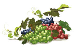 Different varieties of grapes, still life Royalty Free Stock Images
