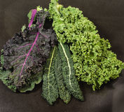 Different varieties of kale leaves Stock Image