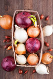 Different varieties of onions. On a kitchen board and wooden surface Royalty Free Stock Photo