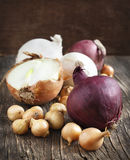 Different varieties of onions Stock Photos