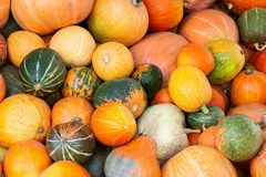 Different varieties of  pumpkins. Colorful vegetables top view Stock Photography