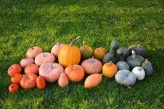 Different varieties of pumpkins and squashes Stock Photos