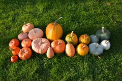 Different varieties of pumpkins and squashes on grass Royalty Free Stock Images