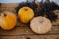 Different varieties of squashes and pumpkins. stock image