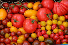 Different varieties of tomato harvest Royalty Free Stock Photos