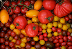 Different varieties of tomato harvest Royalty Free Stock Photography