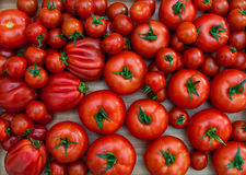 Different varieties of tomatoes royalty free stock photos