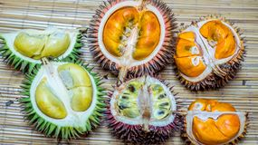 Different variety of durian fruit that can be found in Borneo, Indonesia stock photo