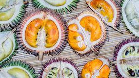Different variety of durian fruit that can be found in Borneo, Indonesia stock photos